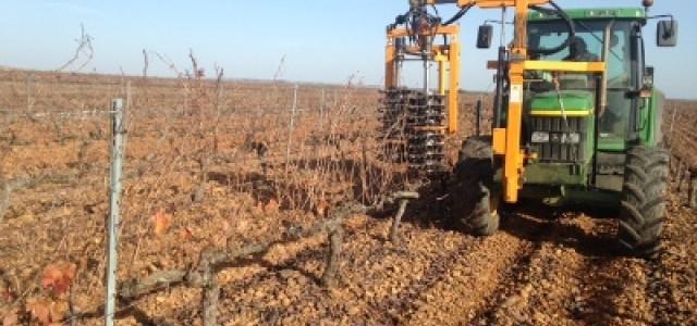 Hemos dado comienzo a la poda de nuestros viñedos